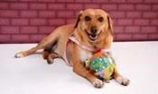 Folder do Evento: Desfile Canino