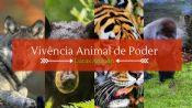 Folder do Evento: Vivência animal de poder