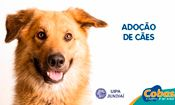 Folder do Evento: Adoção de Cães em Jundiaí